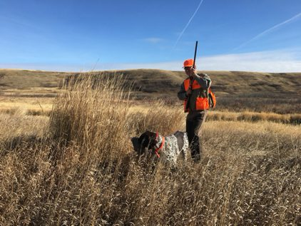 Little Bow Pheasant Ranch Rooster Hunt